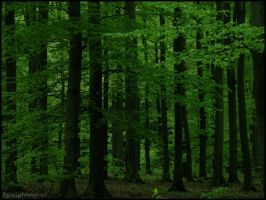 Deep green forest... by nightmare7