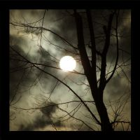 full moon by nie-we-snie