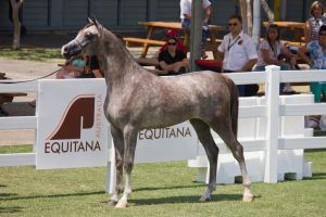STOCK - Equitana 2013-249 by fillyrox