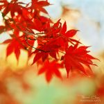 .:Fading Autumn:. by RHCheng