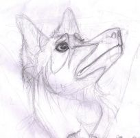Vis Wolf Form Head-Shot by Violet-the-Siberian