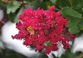 Just another bush bloom by Tailgun2009