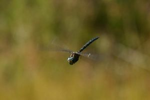Dragonfly 2 by Arctictouch