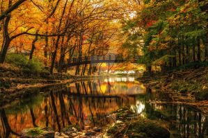 Fall reflections by aaronchoiphoto