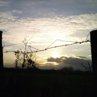 Barbed wire by Refract