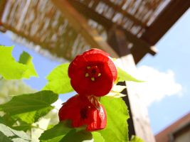 Red bell by Datts