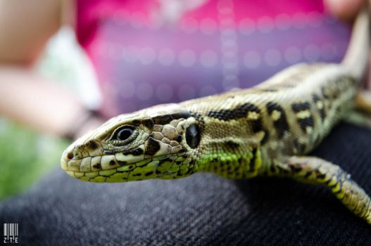 Green Lizard - Perspective by case15
