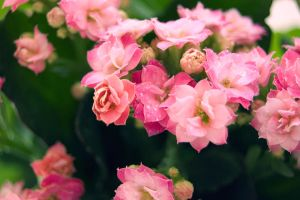Pink and green by Mithertiths