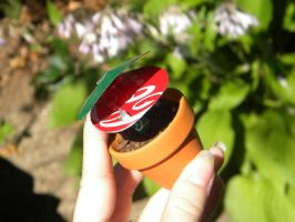Soda Can Venus Flytrap - mini by Christine-Eige