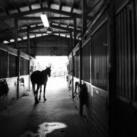 A Day Begins at the Barn... by S1oane