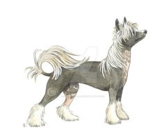 Dog breeds, day 11 by saraquarelle