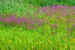 Strokes of Purple and Green by jeuxsansfrontieres