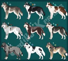 Siberian Husky Imports 01: CLOSED!!! by Sedillo-Kennels