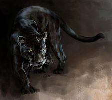 Doodle 163 - Black Jaguar by giovannag