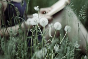 The Dandelion Whisper by pinkparis1233
