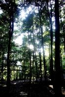 our forrest by littlechross