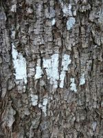 Texture: Bark by IdunaHayaPhotography