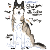 Shadow by Frilled-Kennels