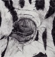 Zebra eye graphite on vellum by smilinggoatstudio