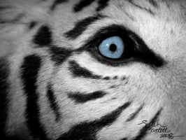 White Tiger's Eye Close Up by NaturePunk