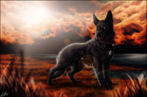 .:Meilenweit:. by WhiteSpiritWolf