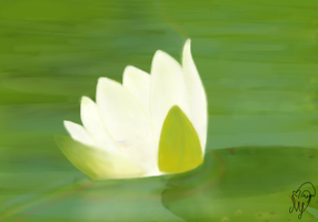 lilly pad by pixieangel3