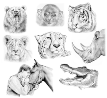 Animal Sketches by gregchapin