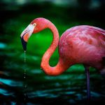 Pink by clippercarrillo