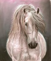 04. Andalusian horse by Mrfour1