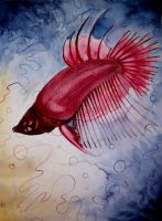 Fish by Divulged