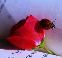 Little ladybug! by M-picz