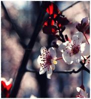 Sweet Pink Blossoms 2 by GrotesqueDarling13