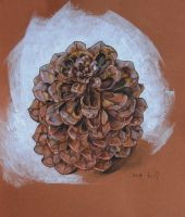 PINECONE by hosanna9