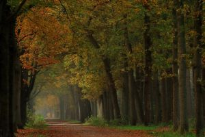 Once again autumnal splendour by jchanders