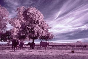 country of trees, gras n cows by LordGuardian
