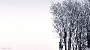 trees in winter by MrsSin