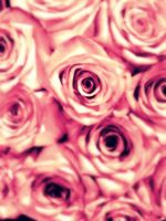 Roses by life-is-a-battle