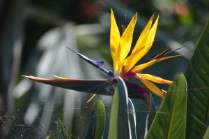 Bird of paradise by iskarlata