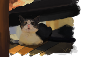 Color Study Of A Cat by victter-le-fou
