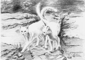 Two white cats by danuta50