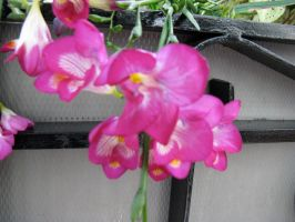 Flowers 1 by penny-duchess-stock
