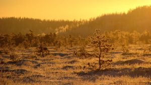 30.11.2010: Cold Morning Gold by Suensyan