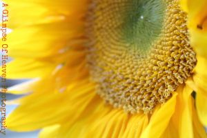 Sunflower by YourEvilAddiction