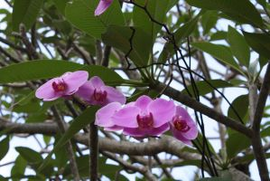 orchids 1099 by fa-stock