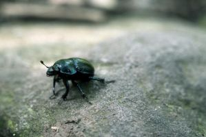 weevil by gd08