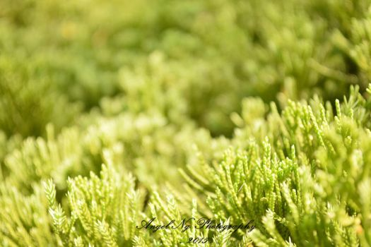 Green. by angelng1231