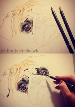 Pug WIP 1 and 2 by EmilyHitchcock