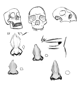 Skull and nose practice by giraffesonparades