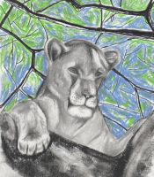 Lioness in the trees by philippeL