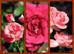 Roses triptych by Liuanta